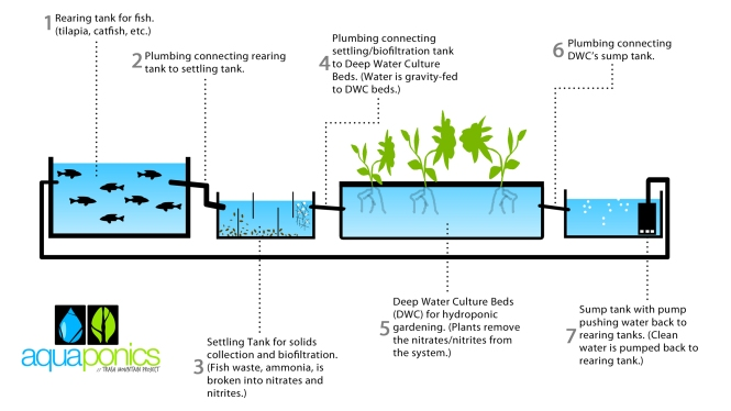 aquaponics-for-beginners